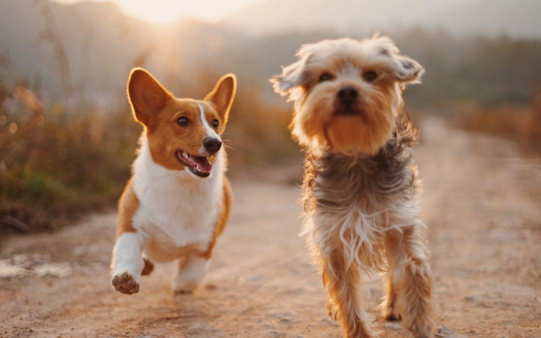 Nepropásněte čipování psů